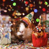 Mehrschwein Geburtstag